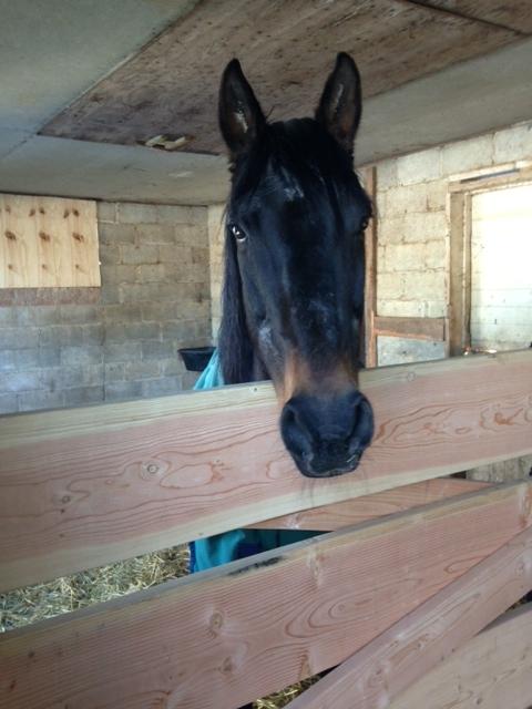 HORSE!.JPG