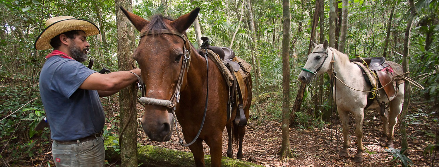 Jungle Horseback Riding in Belize