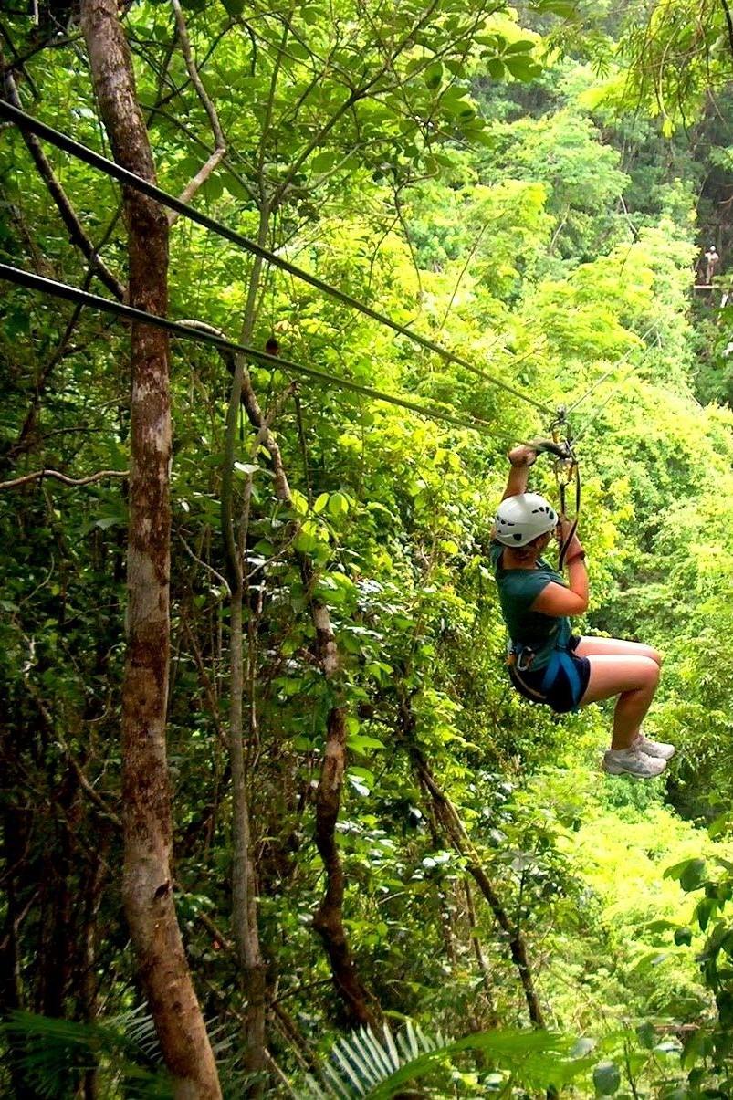 Jungle Excursions -