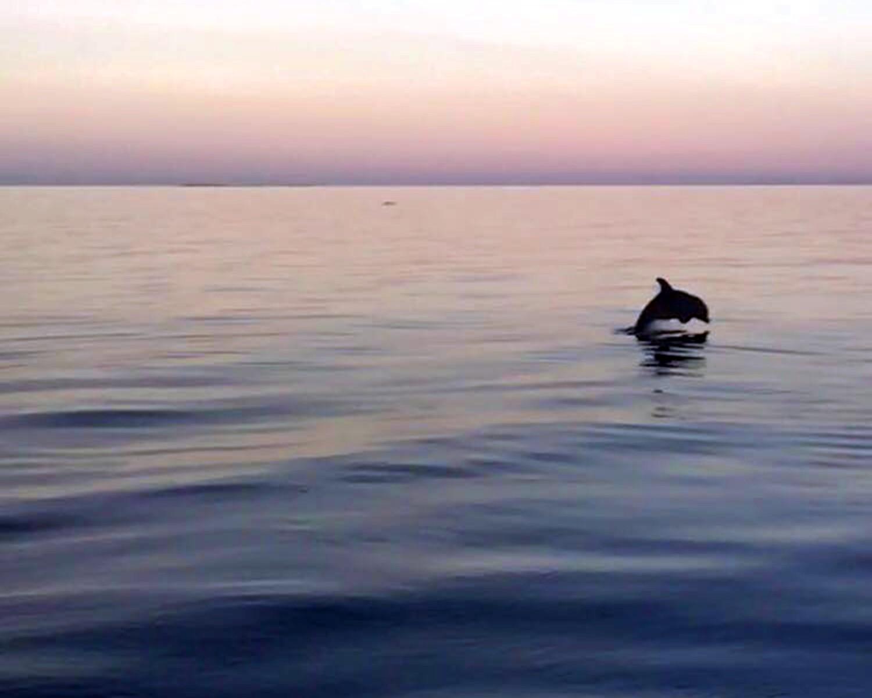 dolphin-compressman (1).jpg