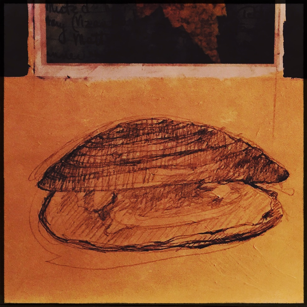 mussel drawing in process