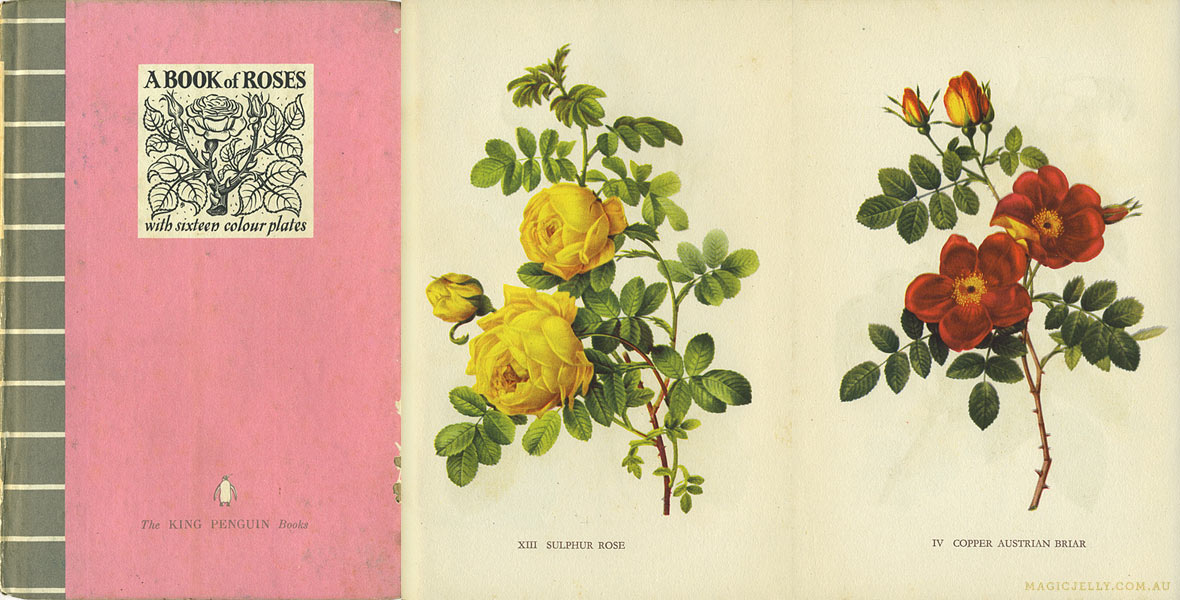 A Book of Roses , written by John Ramsbottom, illustrations from Redouté's  Roses . 1941.
