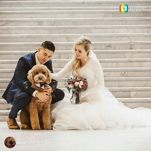 Beautiful wedding with usagiteam bowtie on their dog. Congratulations! #doginbowtie #dressydogs #dapperdog #doglovers #dogsofinstagram #dogcollar #dogbowtie #dogfashion #dogtie #petaccessory #petstagram #love #lovecat #lovedog #lovepets #fancycats #catbows #bowtiedogcollar #sfetsy #instapets #insta_dogs #usagiteam #etsy #cutepetsposts #minpin #cutepets #cutepet
