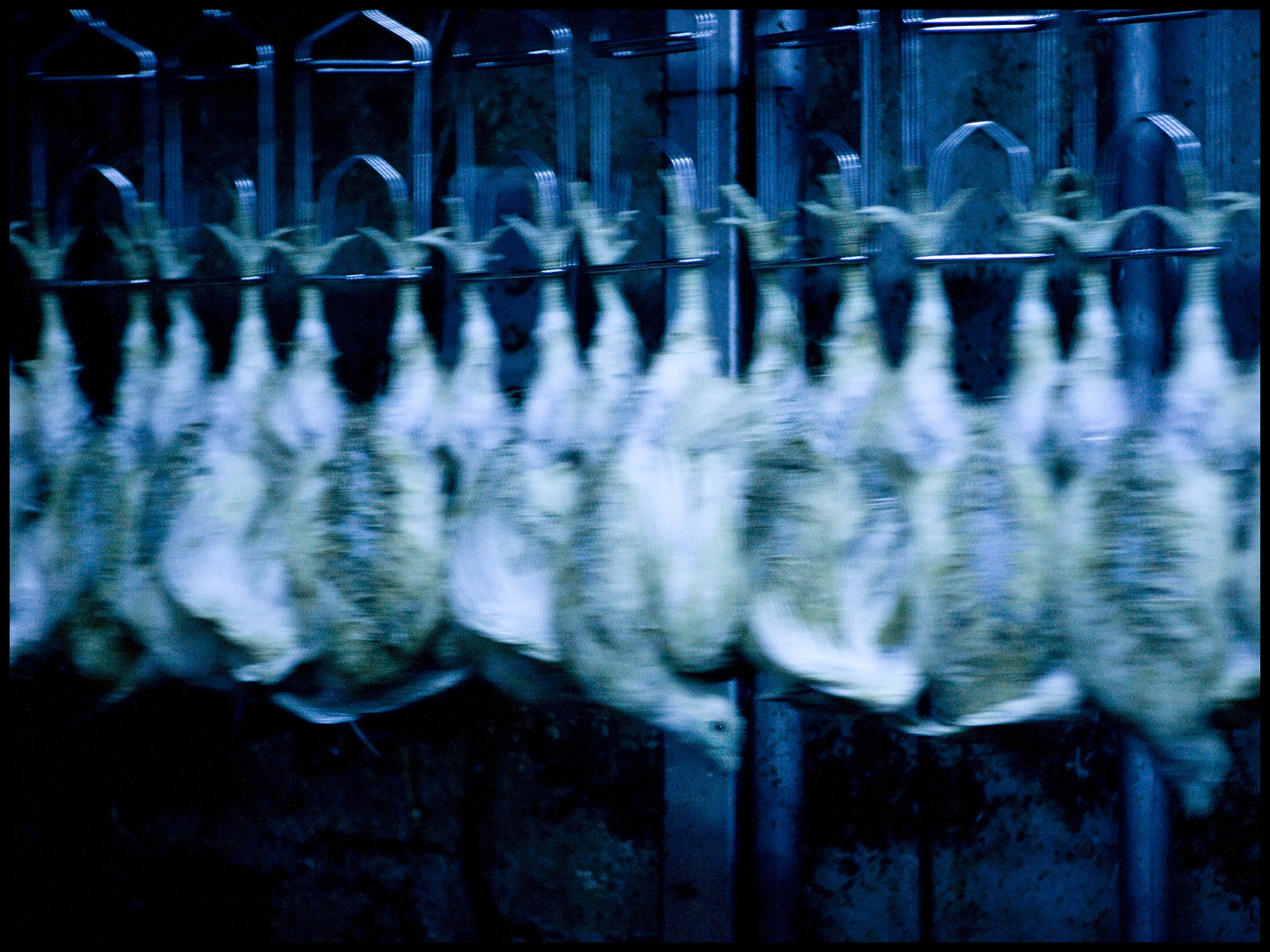 The Manor Farm Chicken Processing Plant