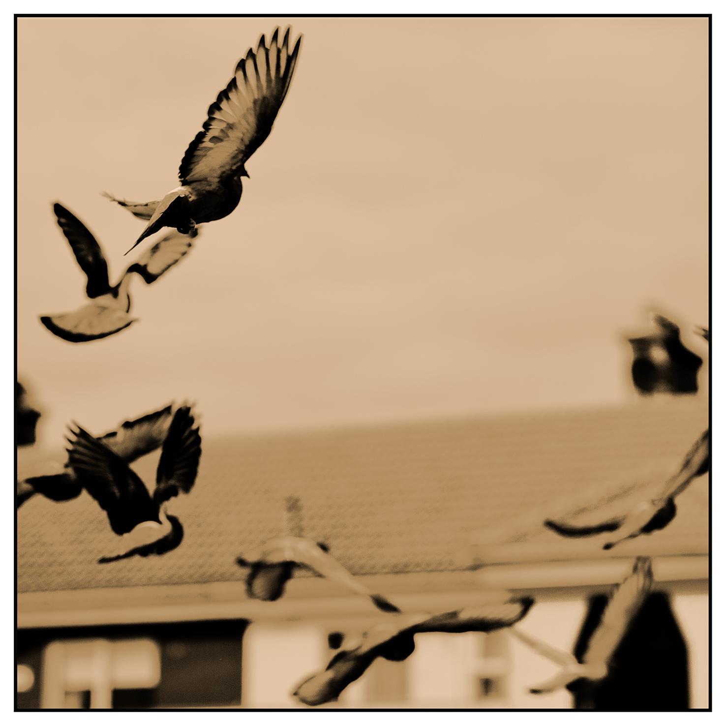 Birds0125.jpg