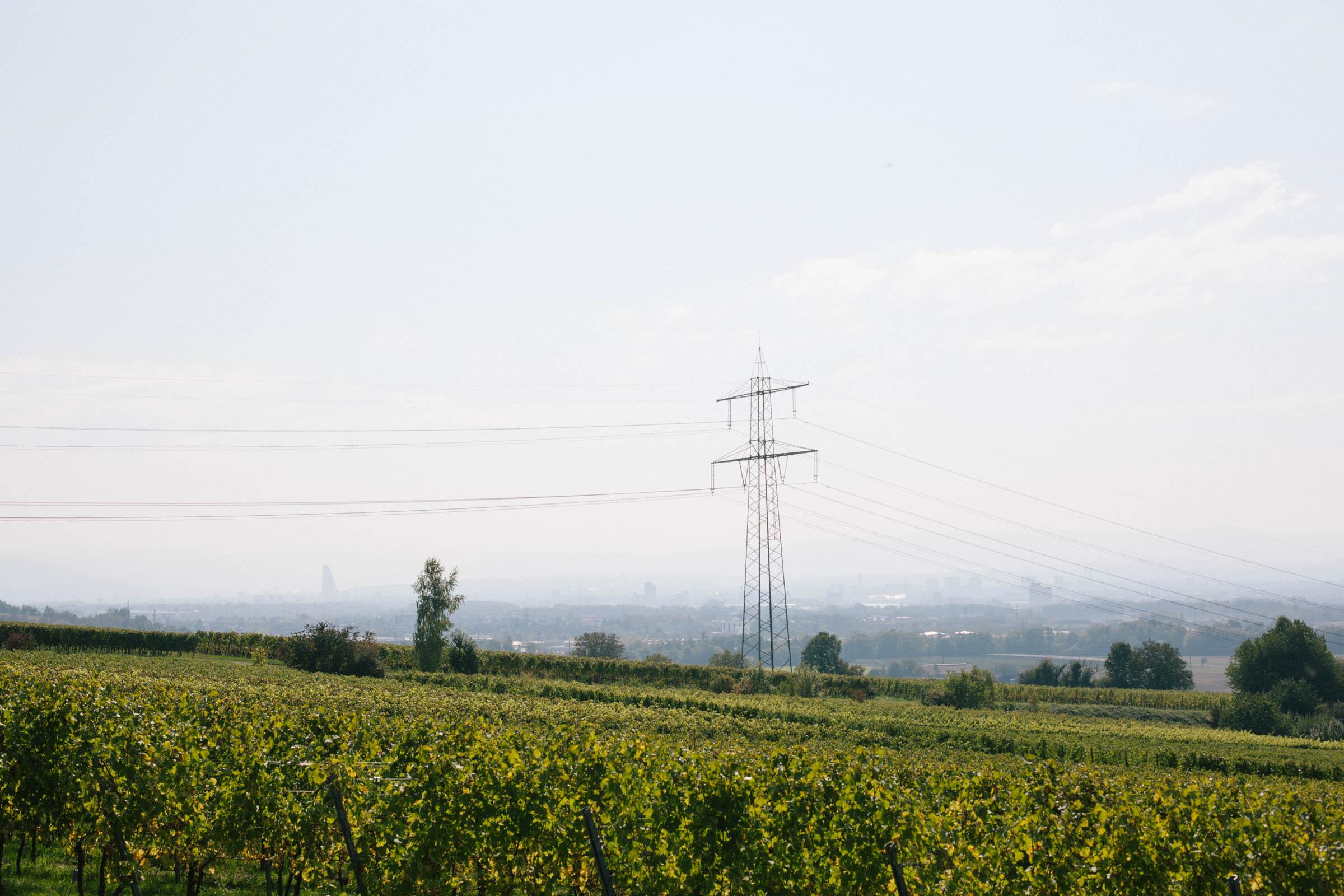 The vineyards in Binzen and the Basel skyline in the haze behind.