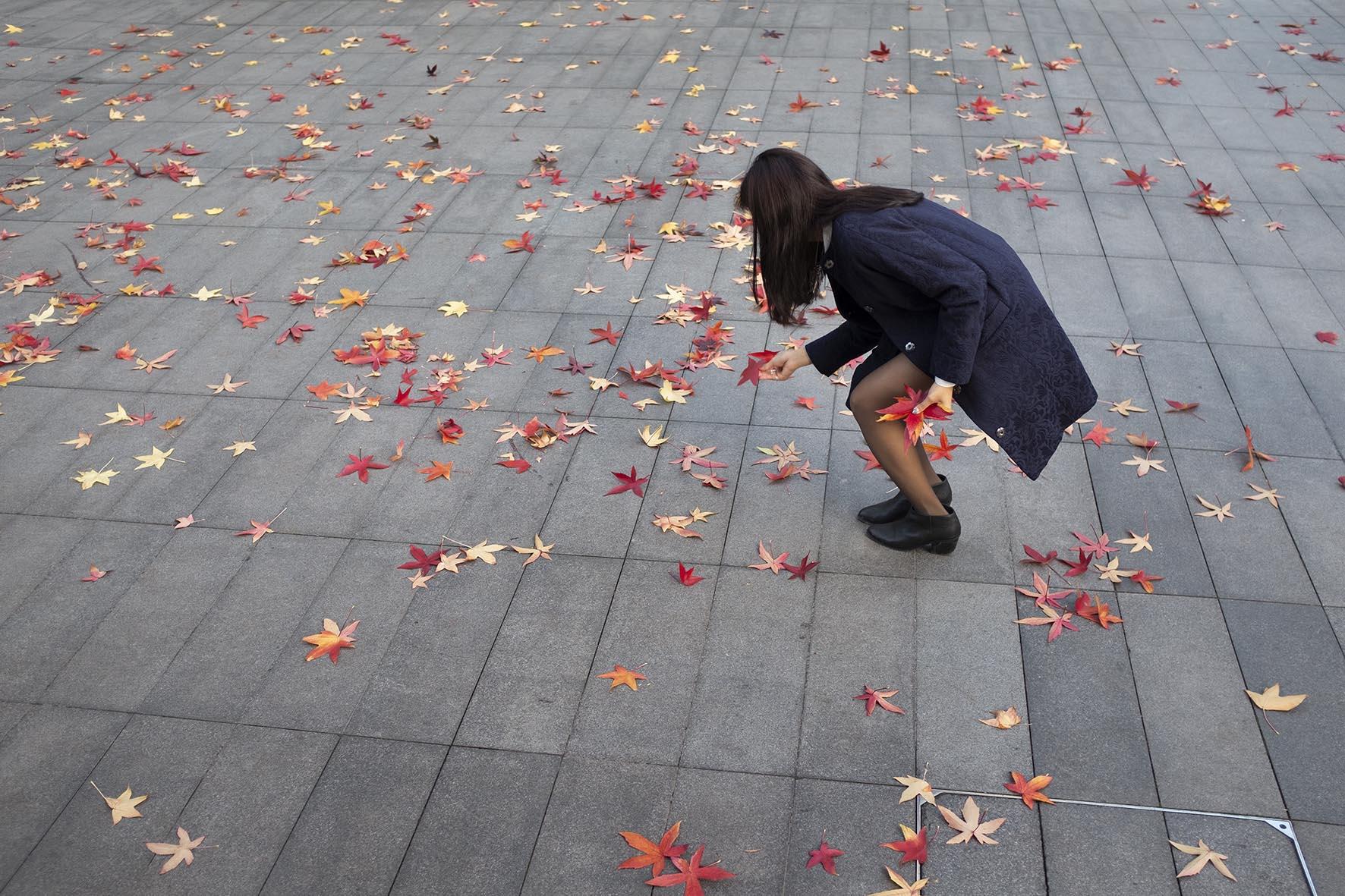 20141129_red autumn leaves_B.jpg
