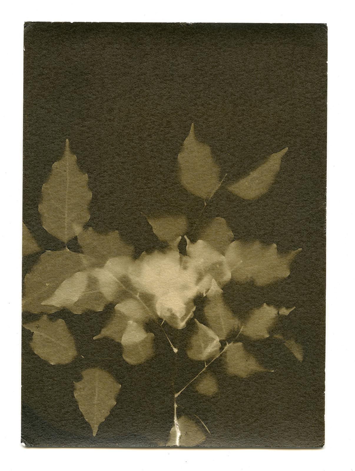 Flora sample elevation16.jpg