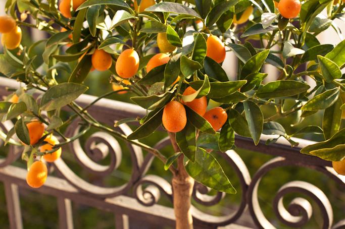 kumquat-0080.jpg