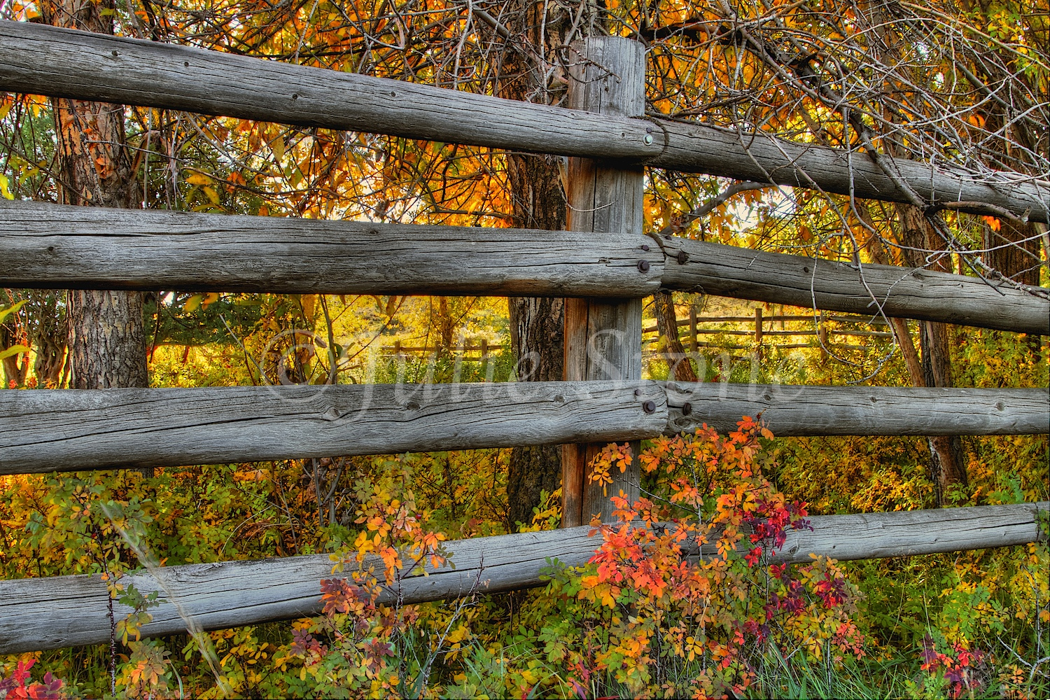 Old Fence 2013