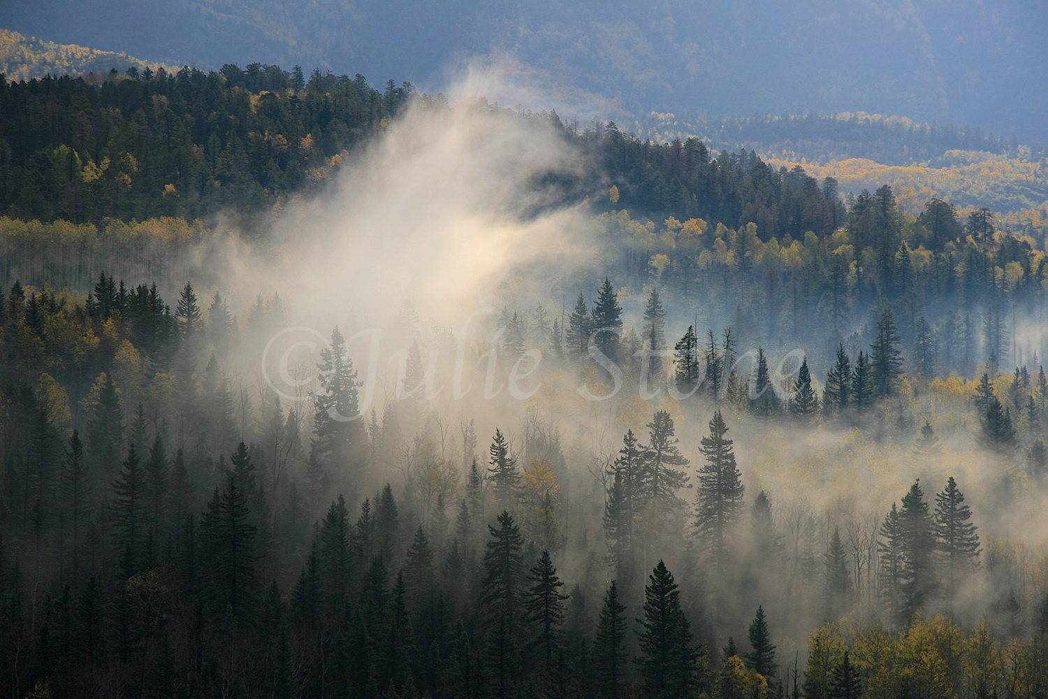 Foggy Morning in the San Juan Mountains 2010