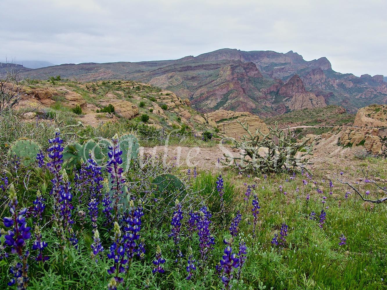 Apache Trail 2005