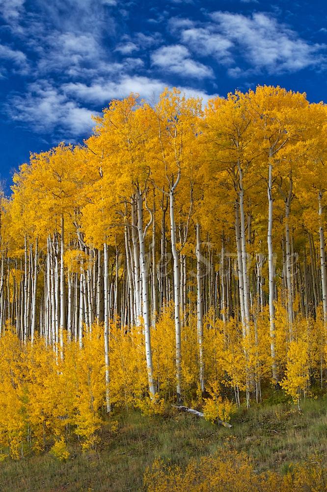 """CASTLEROCK ASPEN GROVE """"Autumn Splendor"""" 2014 (7)"""
