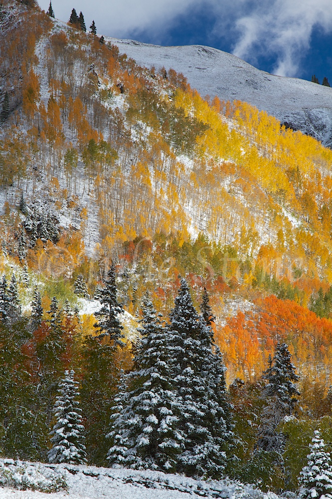RED MOUNTAIN PASS FALL 2014 (2)
