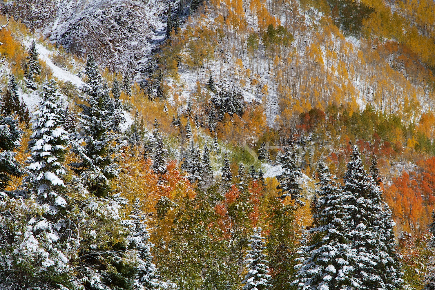 RED MOUNTAIN PASS FALL 2014
