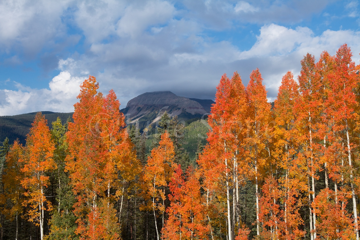 GRIZZLY PEAK FALL COLORS 2014