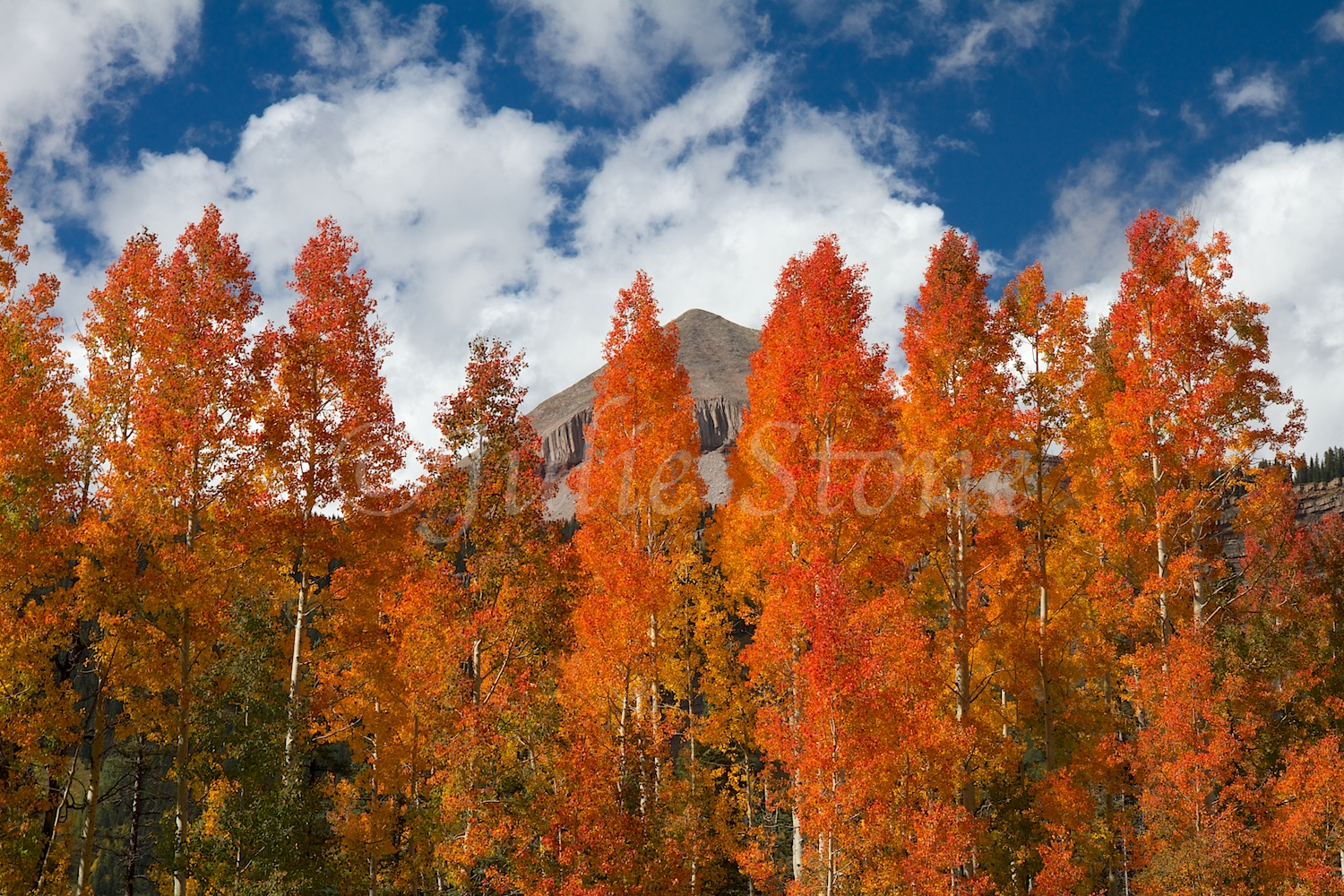 ENGINEER FALL COLORS 2014 (2)
