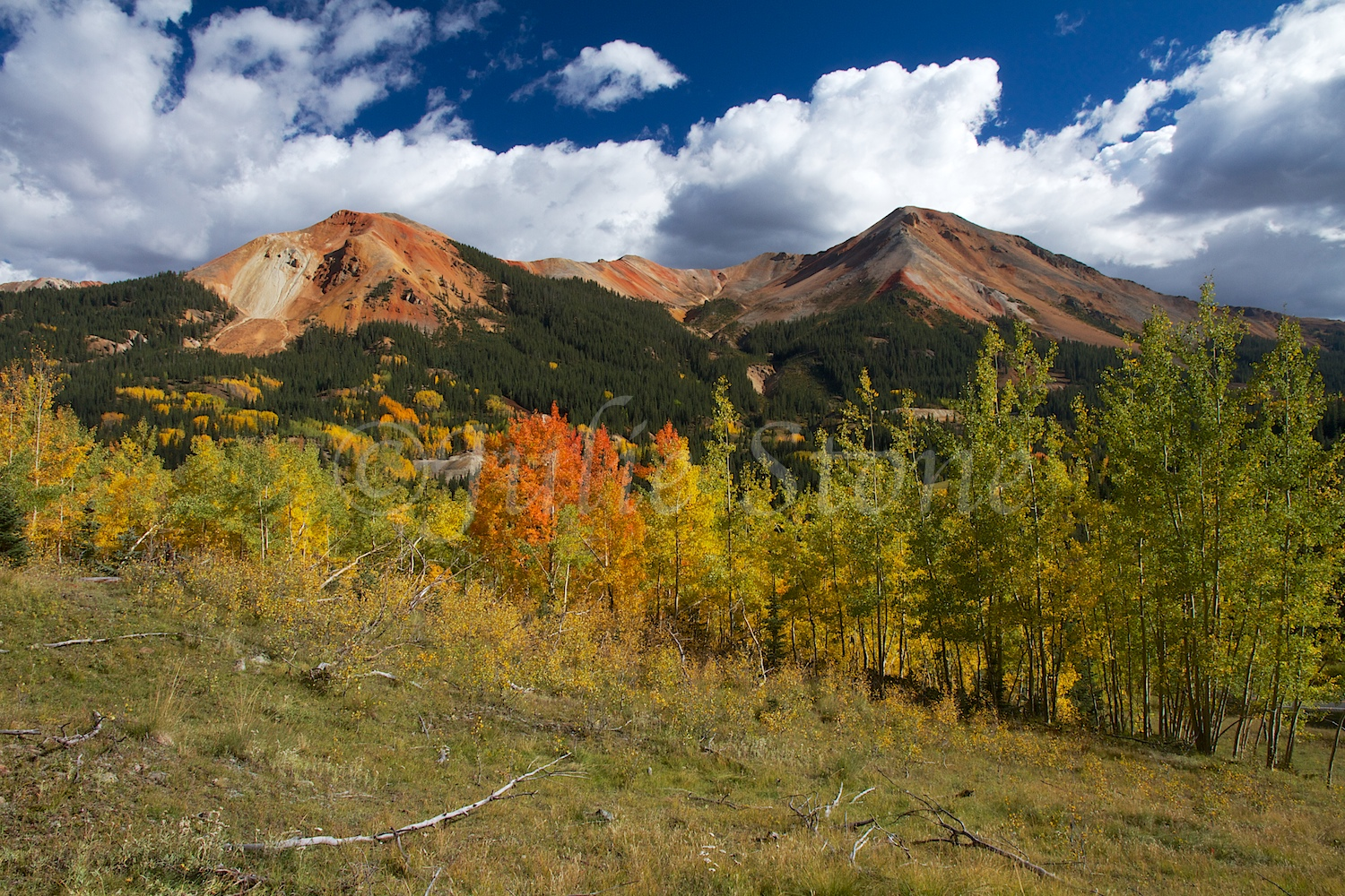 RED MOUNTAIN PASS FALL 2014 (6)