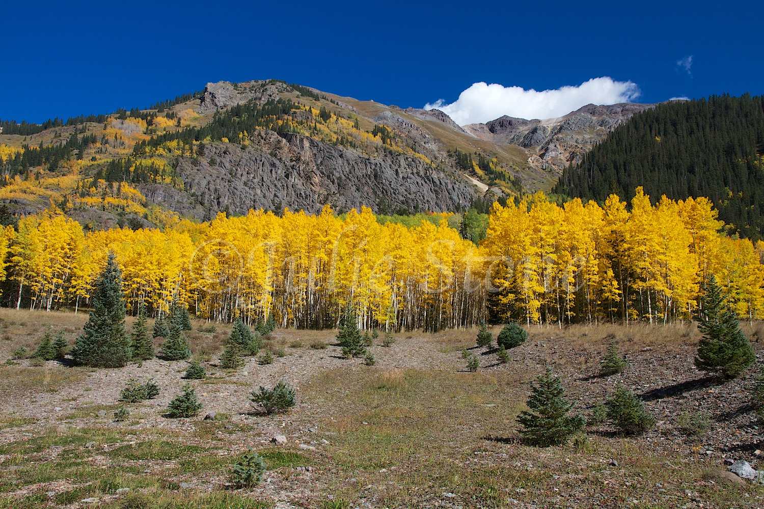 CRYSTAL LAKE ASPEN GROVE FALL 2014 (2)