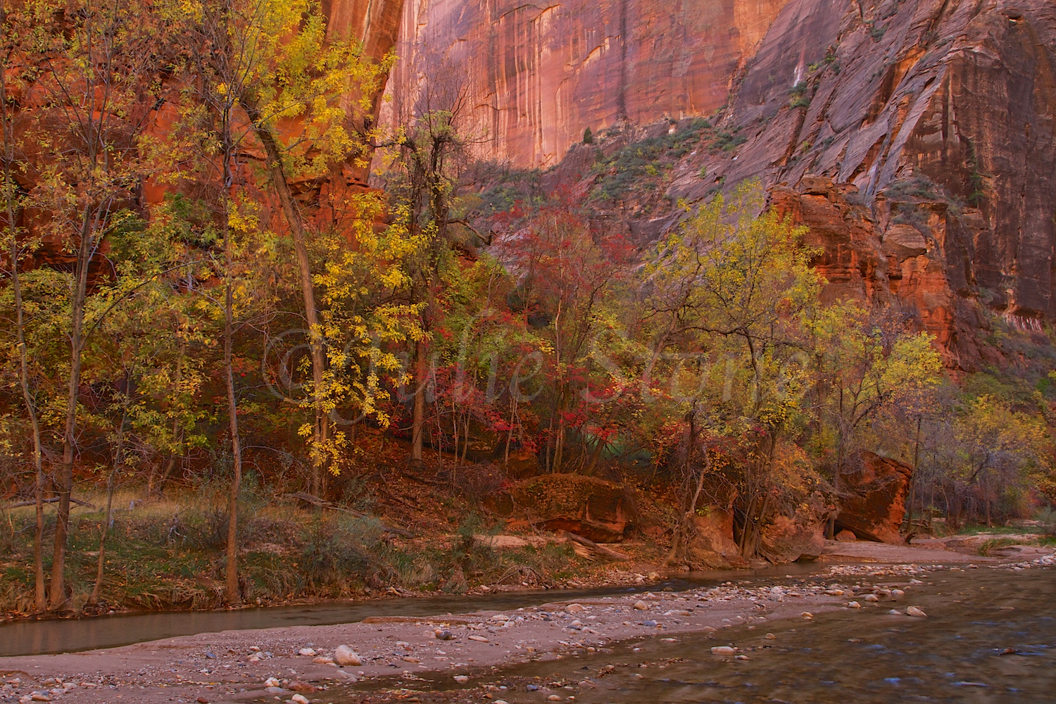 North Fork of the Virgin River Fall 2014