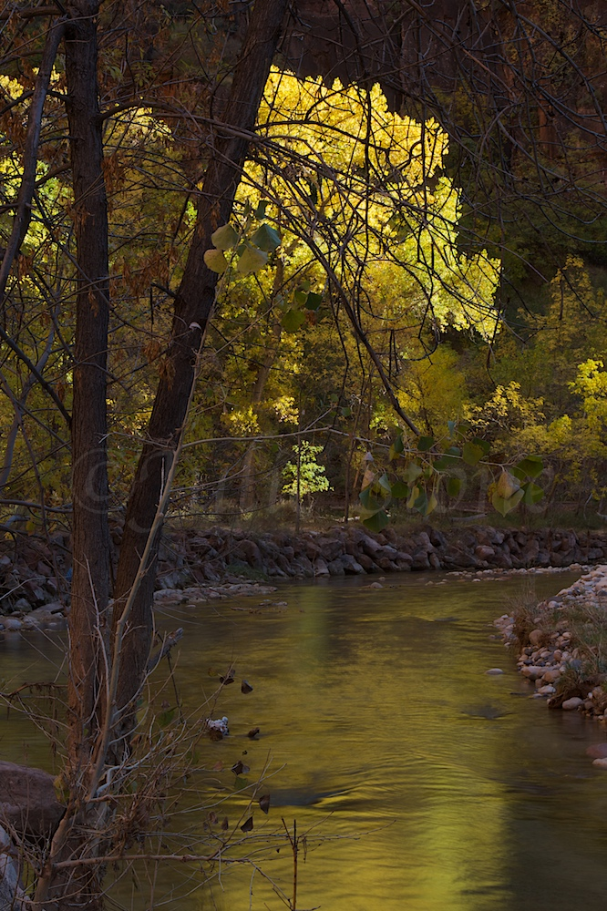 North Fork of the Virgin River Fall 2014 (7)