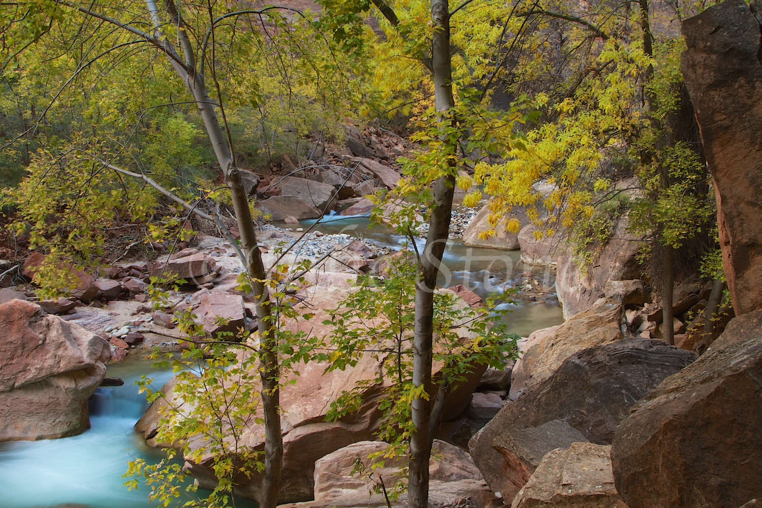 North Fork of the Virgin River Fall 2014 (5)