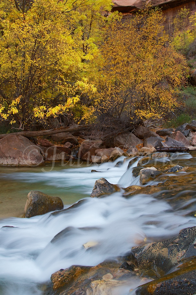 North Fork of the Virgin River Fall 2014 (2)