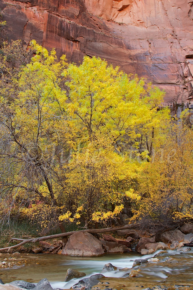 North Fork of the Virgin River Fall 2014 (4)