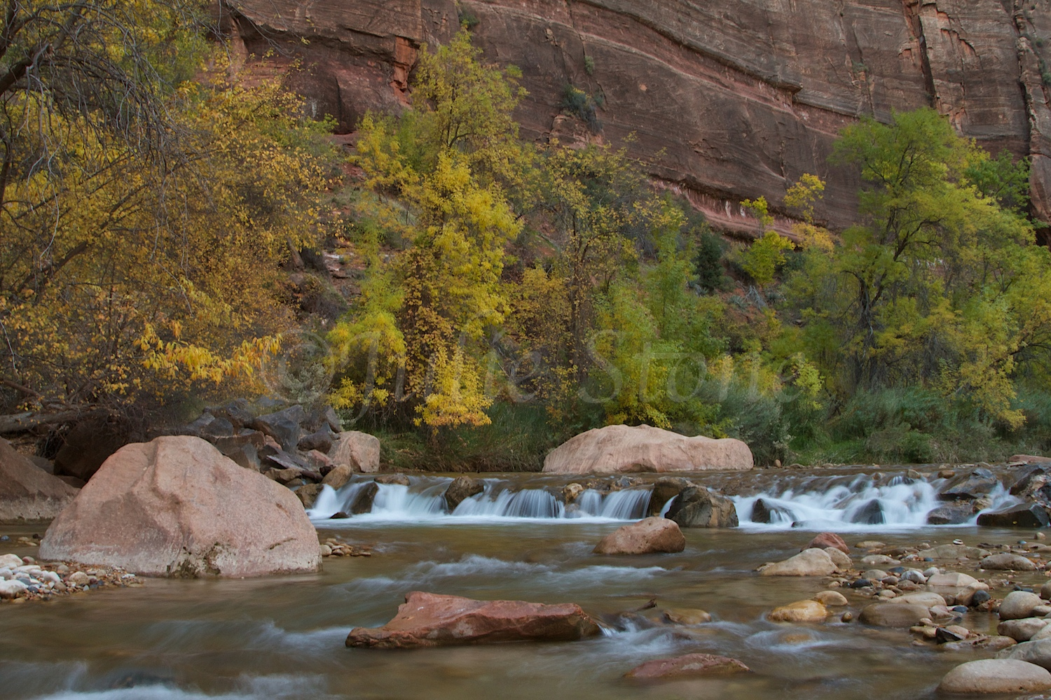 North Fork of the Virgin River Fall 2014 (6)