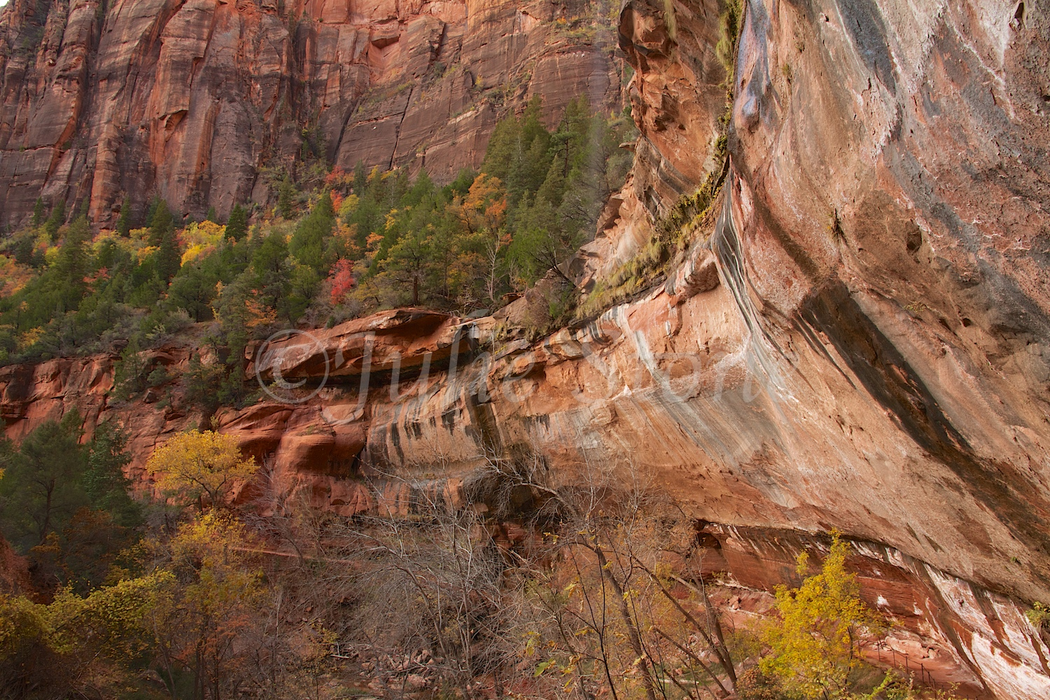 Alcove above Lower Emerald Pools Fall 2014