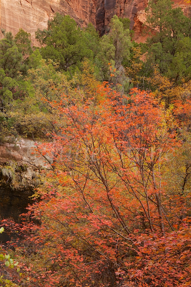 Zion Fall Colors near Emerald Pools Fall 2014
