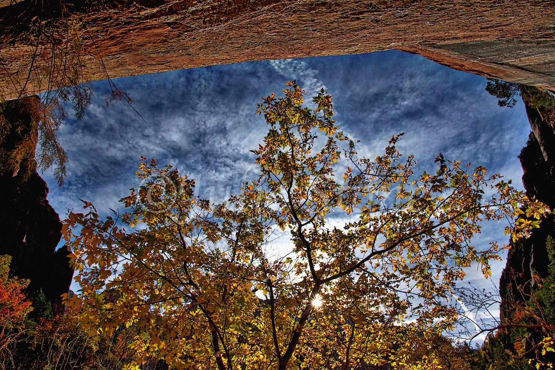 Zion Fall Colors near Emerald Pools Fall 2014 (3)