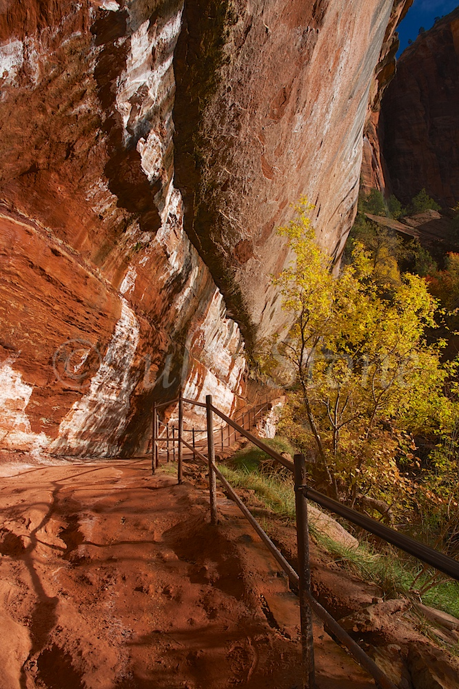 Trail to Emerald Pools Fall 2014