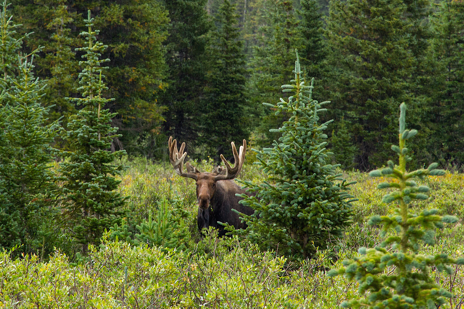 A friend we met at Brainard Lake, Image #4101