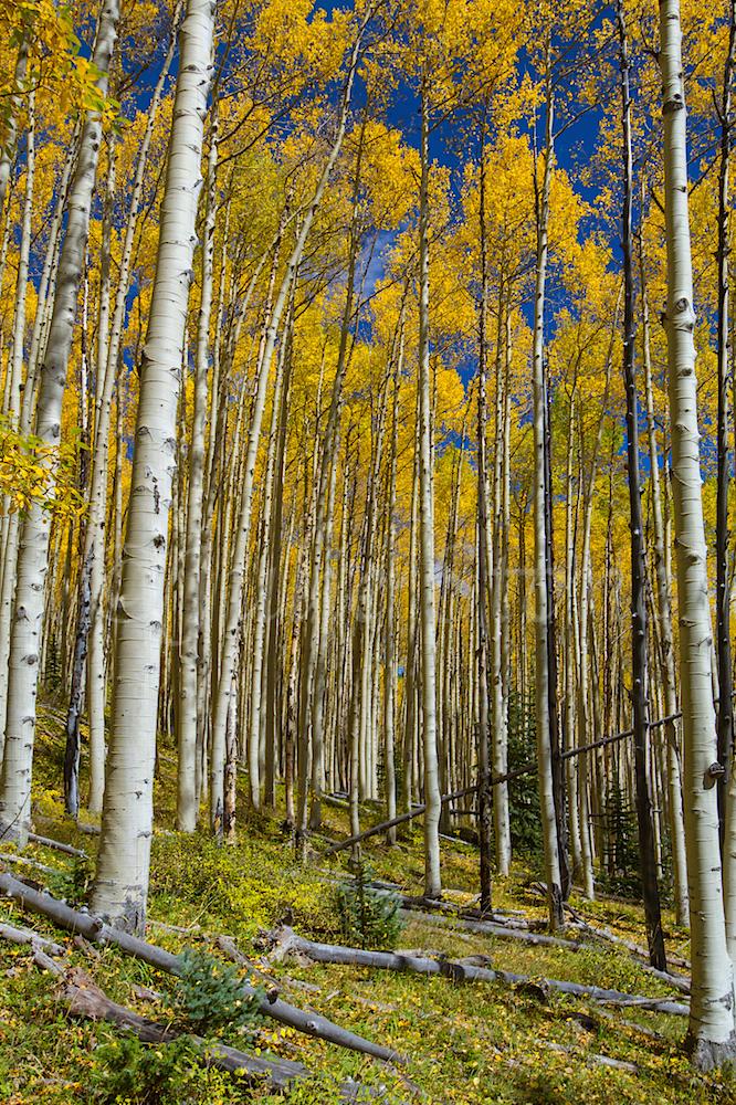 Deer Creek, Image #2804
