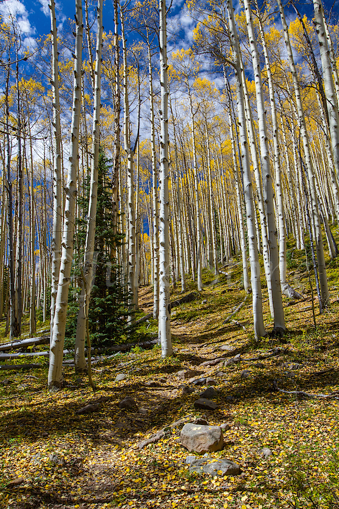 Deer Creek, Image #2915