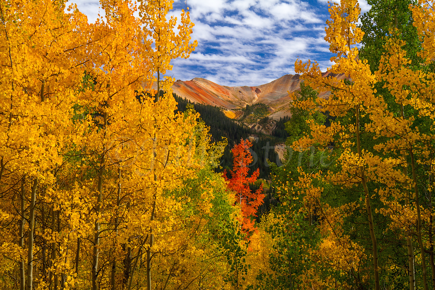 Red Mountain Fall Color, Image #0008