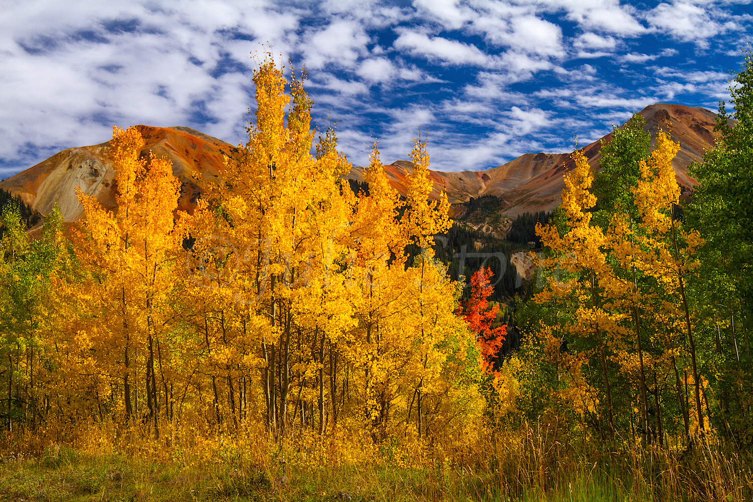 Red Mountain Fall Color, Image #0031