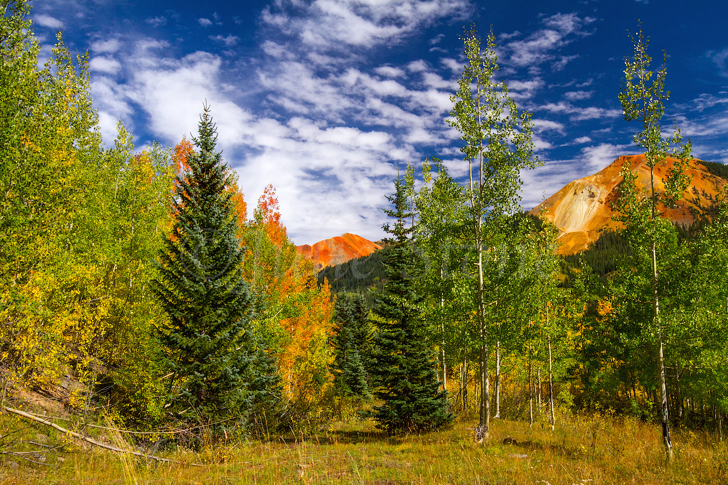Red Mountain Fall Color, Image #0077