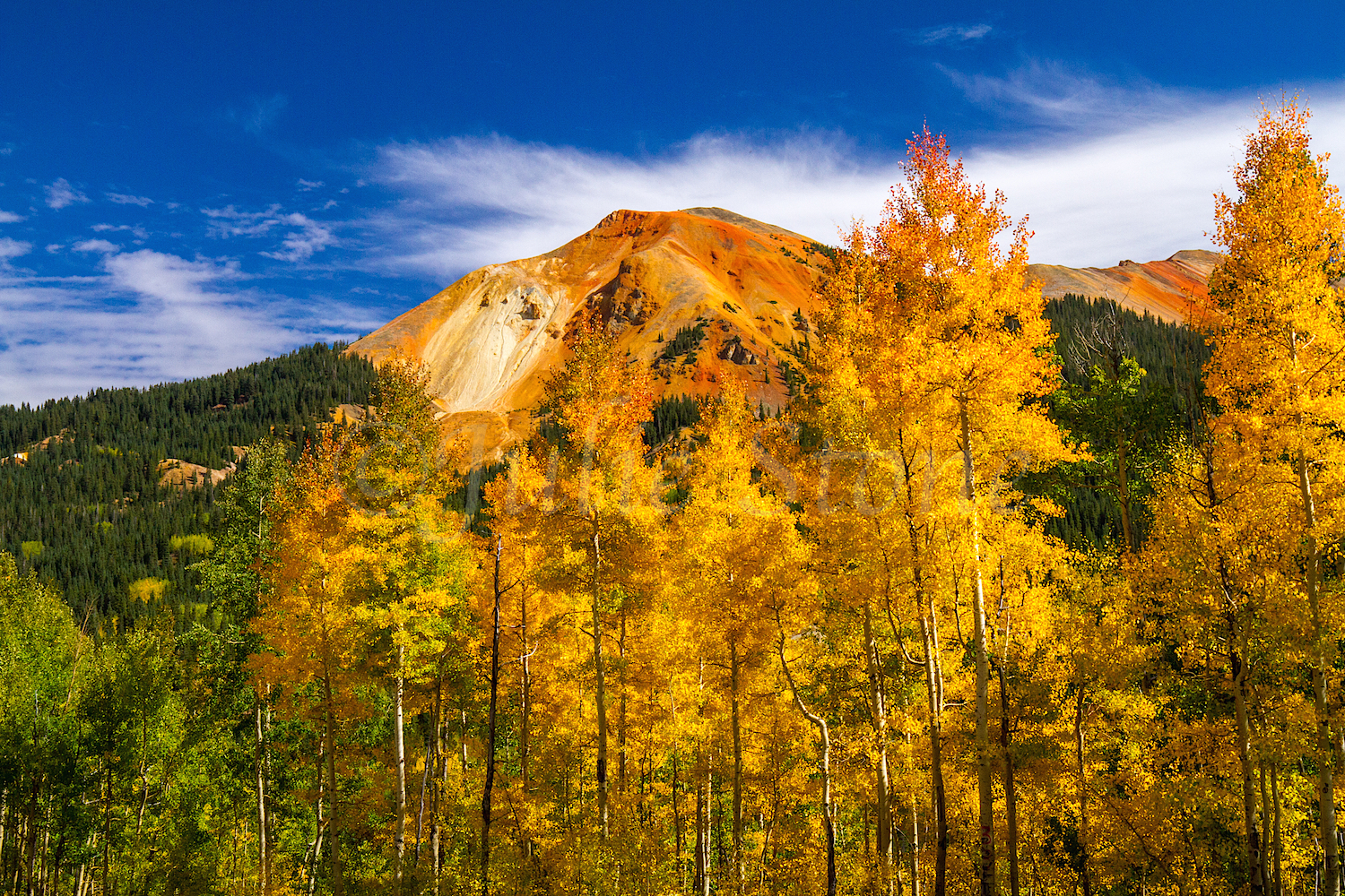 Red Mountain Fall Color, Image #0105