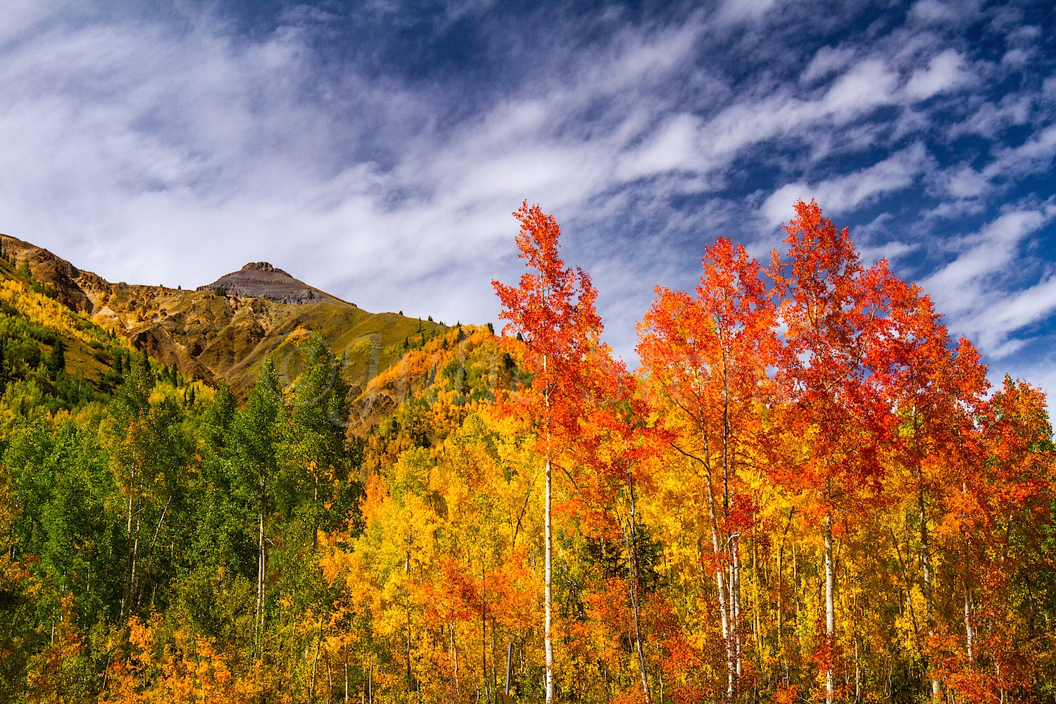 Red Mountain Fall Color, Image #0128