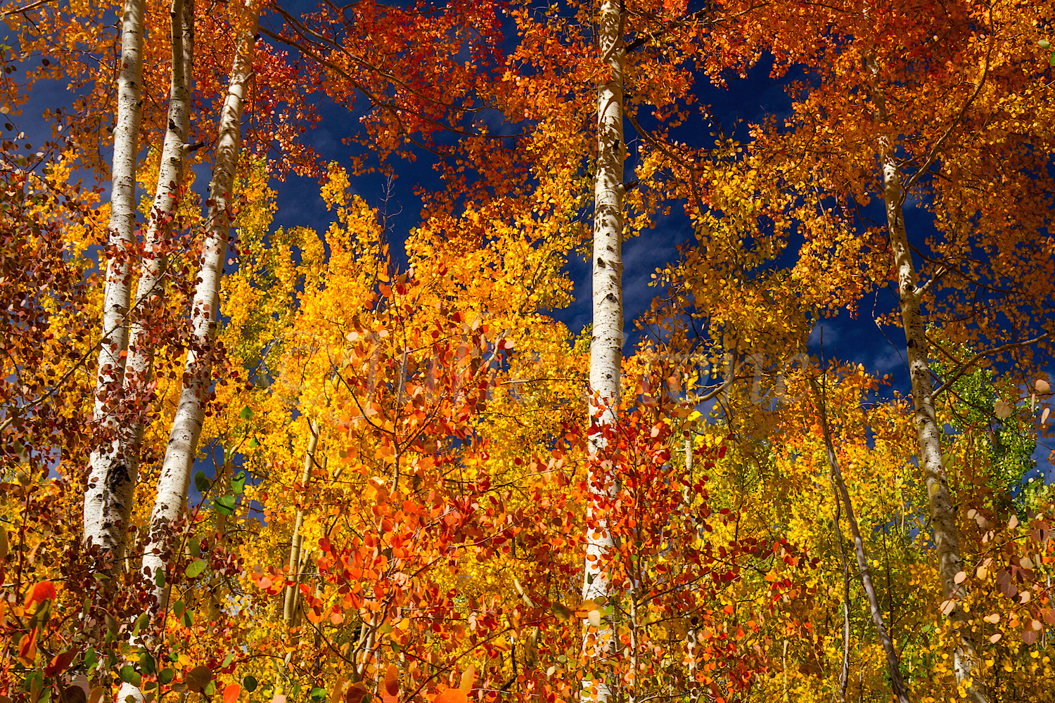 Red Mountain Fall Color, Image #0154