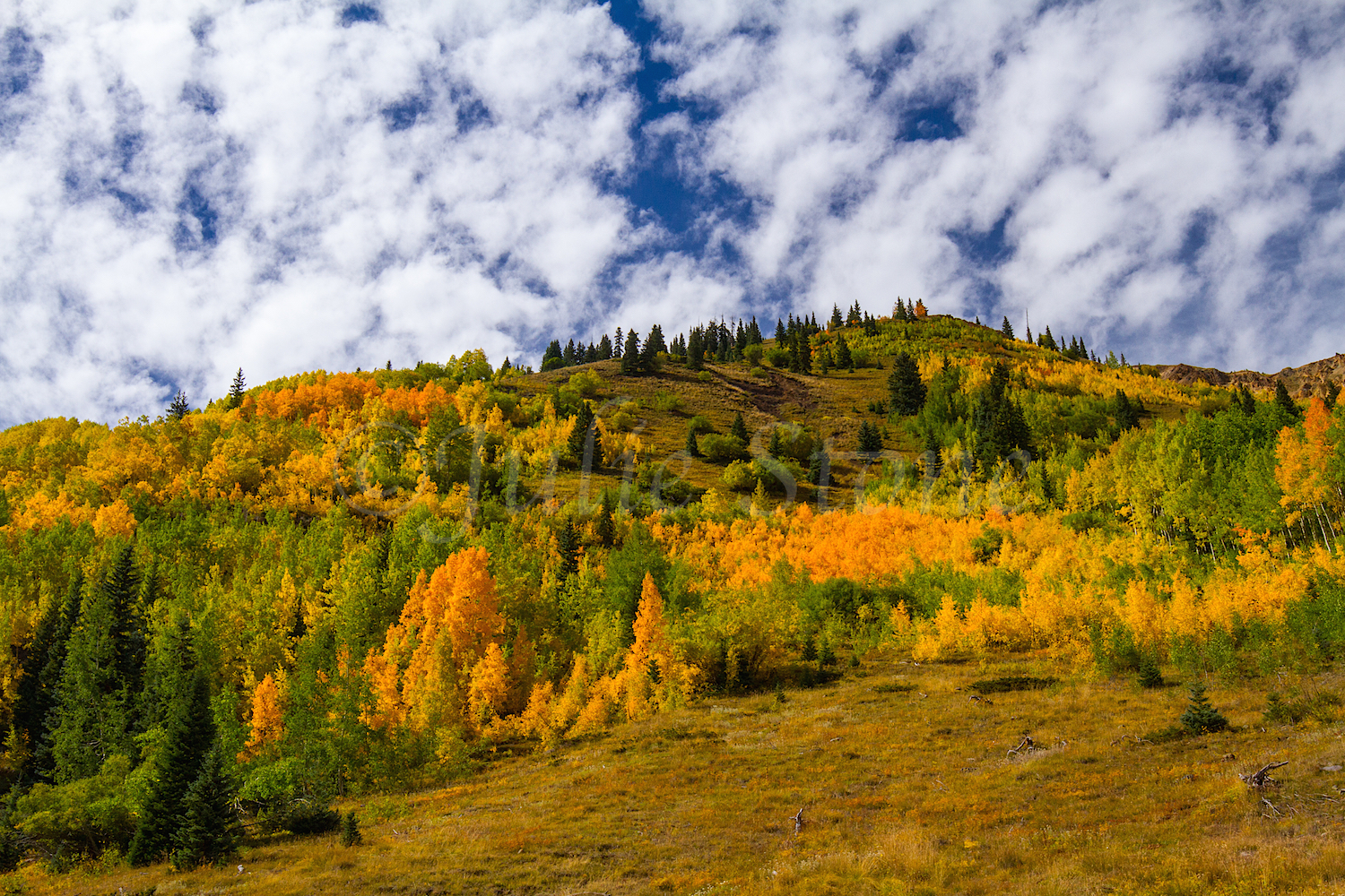 Red Mountain Fall Color, Image #0051
