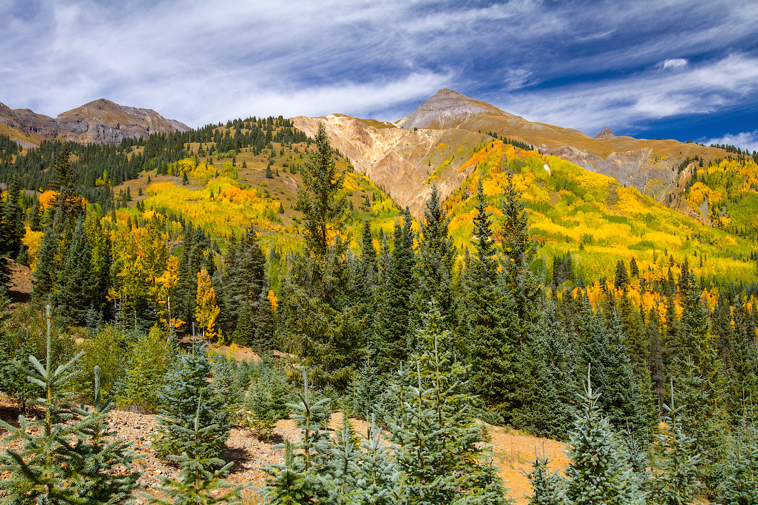 Red Mountain Fall Color, Image #9125