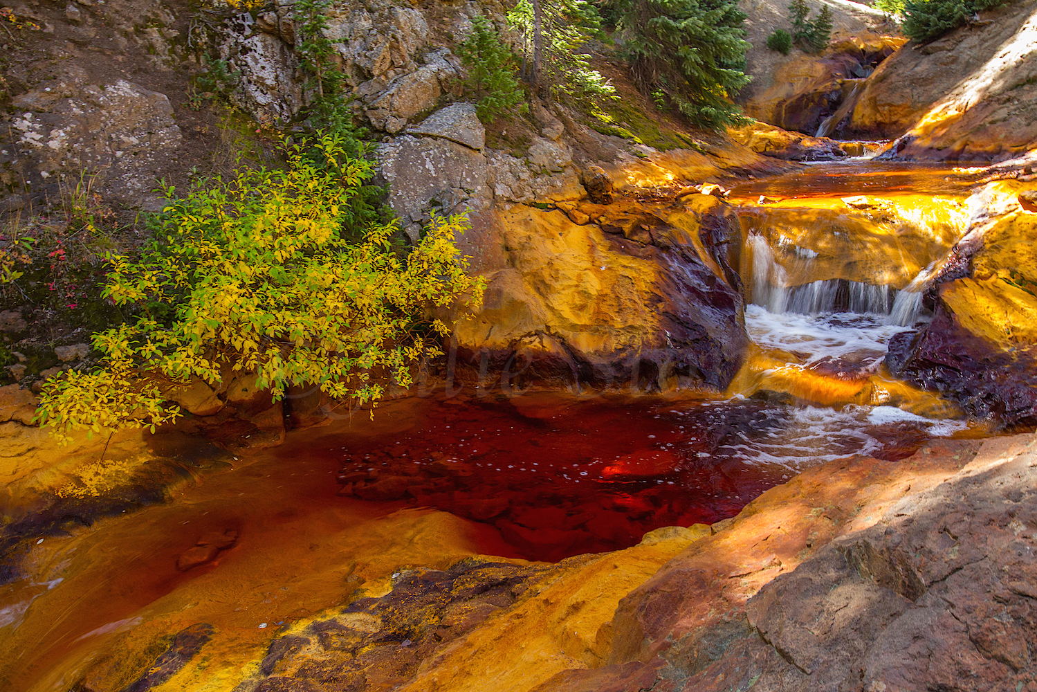 Red Mountain Fall Color, Image #9179