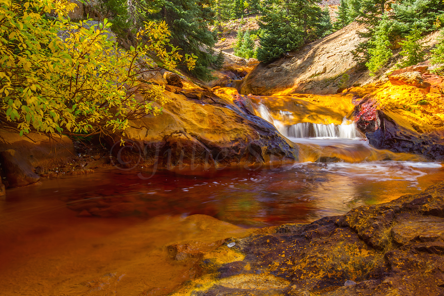 Red Mountain Fall Color, Image #9248