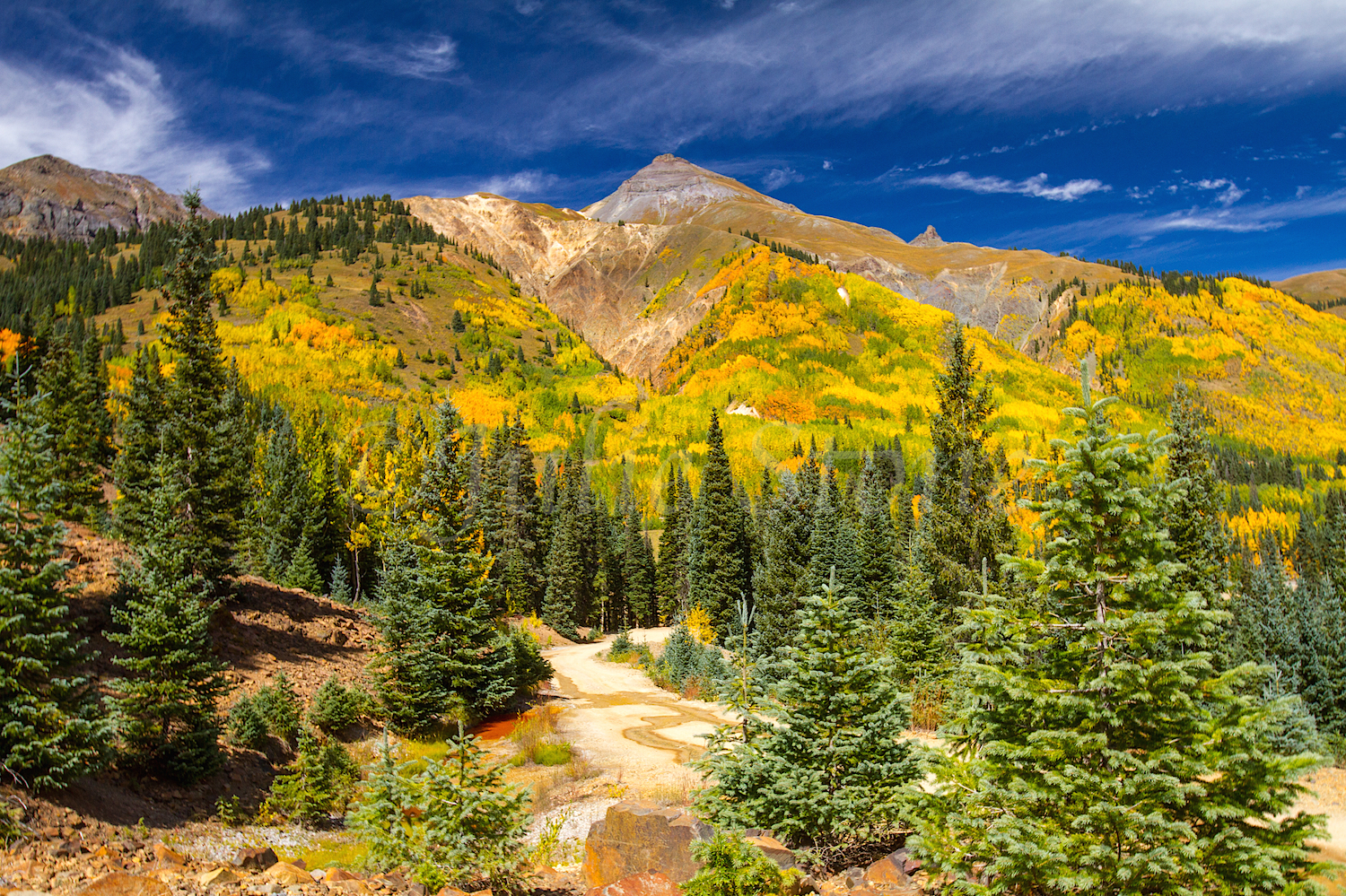 Red Mountain Fall Color, Image #9535