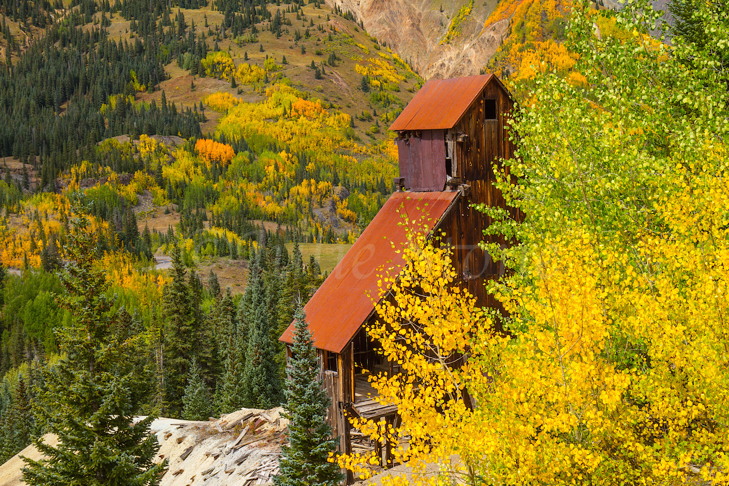 Red Mountain Fall Color, Image #9780