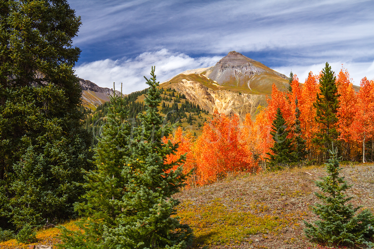 Red Mountain Fall Color, Image #9887