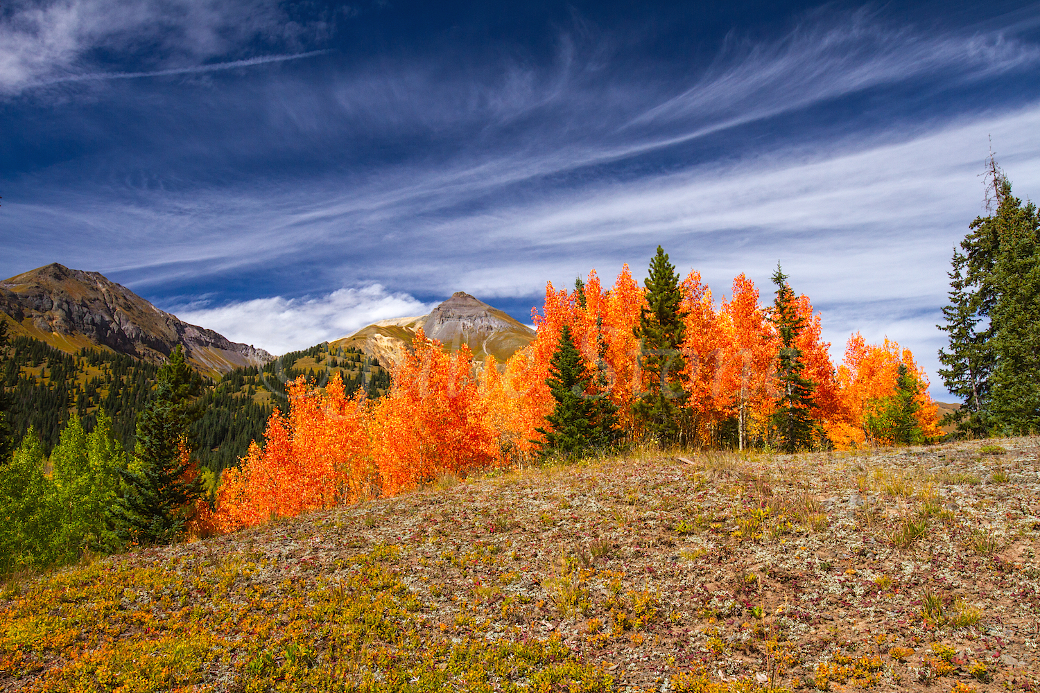 Red Mountain Fall Color, Image #9891